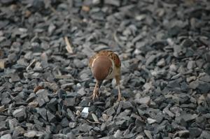The local bird life